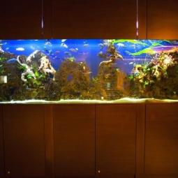 Как оформить аквариум фото